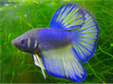 South Africa Pet Fish